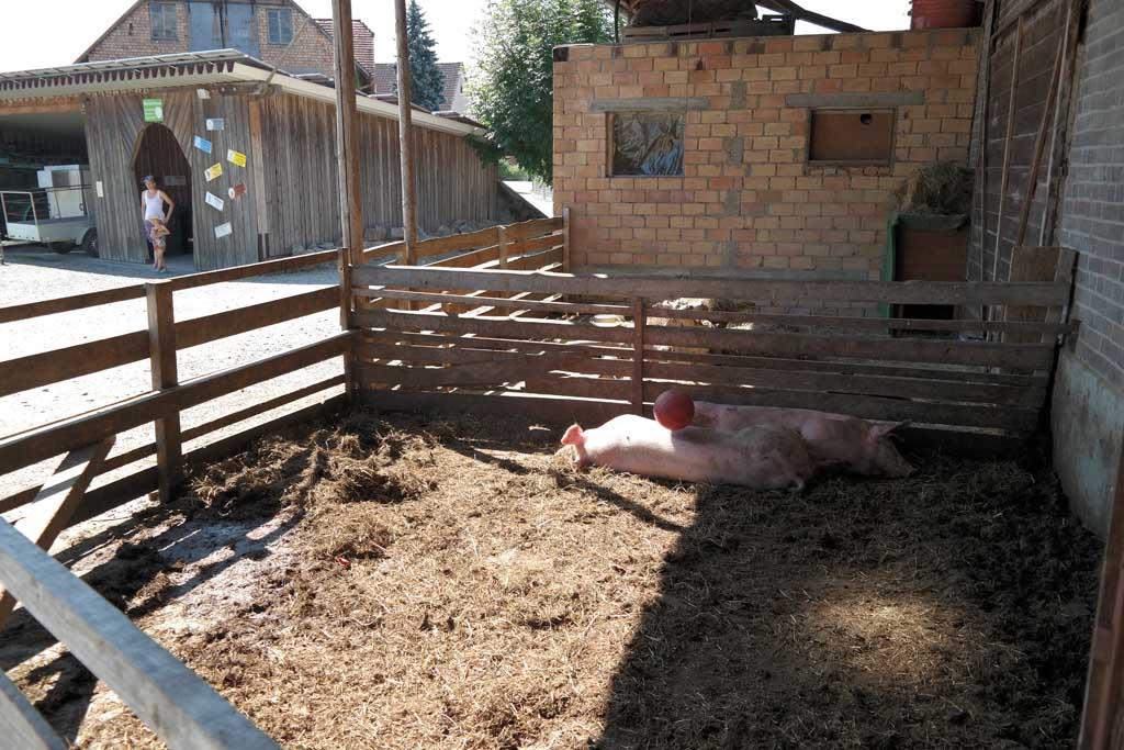 De boerderijdieren, vooral de varkens, zijn leuk voor kinderen.