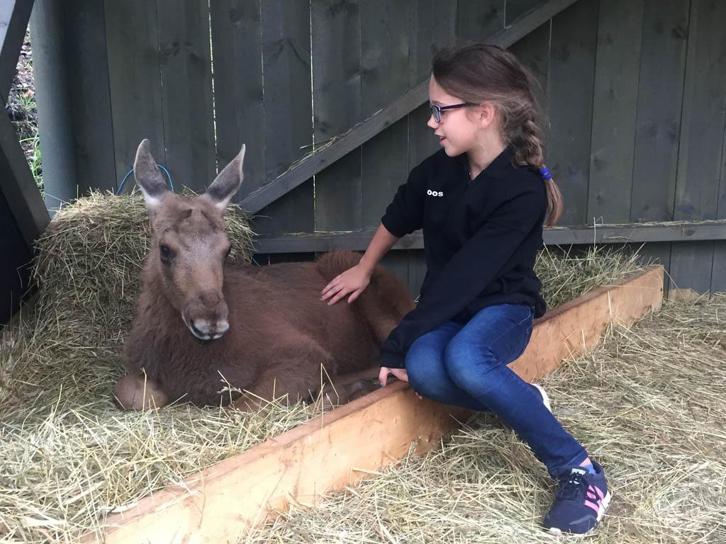 Roos geniet van het bijzondere moment dat ze bij Knotte mag zitten in Elgtun.