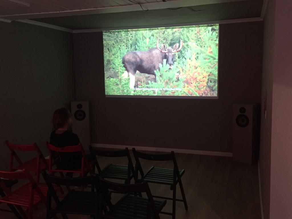 Roos bekijkt de film in Elgtun over elanden in het wild.