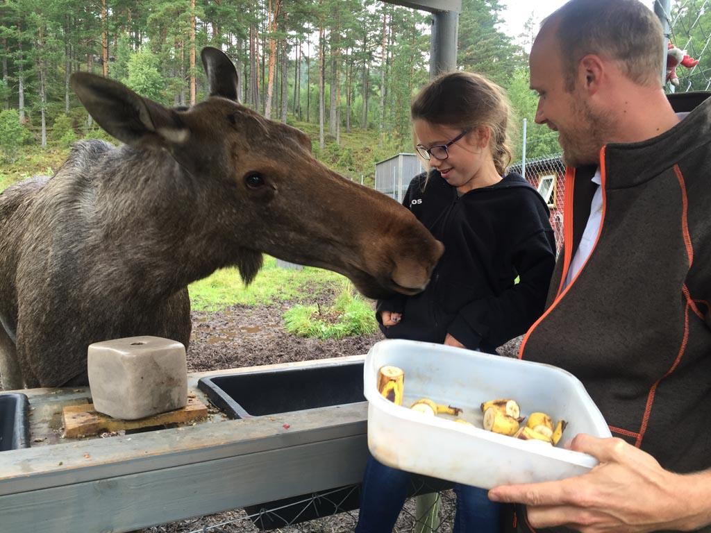 Roos mag eland Olga haar bananen voeren en kan van heel dichtbij Olga goed bekijken in Elgtun