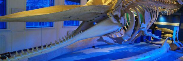 Fries Natuurmuseum in Leeuwarden, een interactieve ontmoeting met de dierenwereld