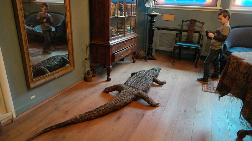 Alsof het de gewoonste zaak van de wereld is, ligt hier een krokodil op de grond.