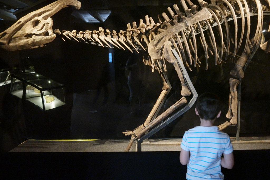 Camiel vindt de skeletten zo interessant dat hij niet eens de tijd neemt om rustig te kijken.