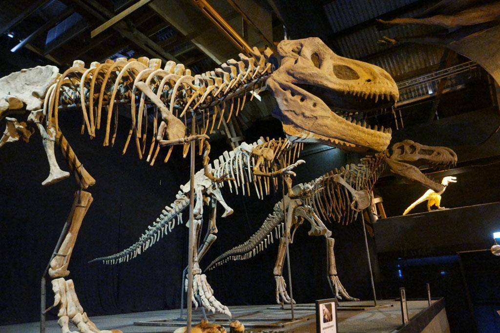 De drie T-Rexen op een rij.