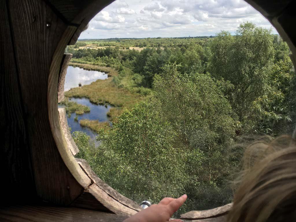 Uitzicht op het Drents-Friese Woud