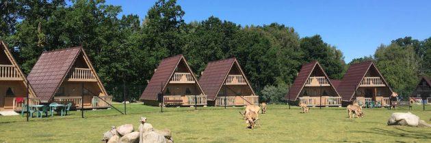 Ölands Djur & Nöjespark: dierentuin, pretpark, aquapark en bijzonder overnachten op Öland