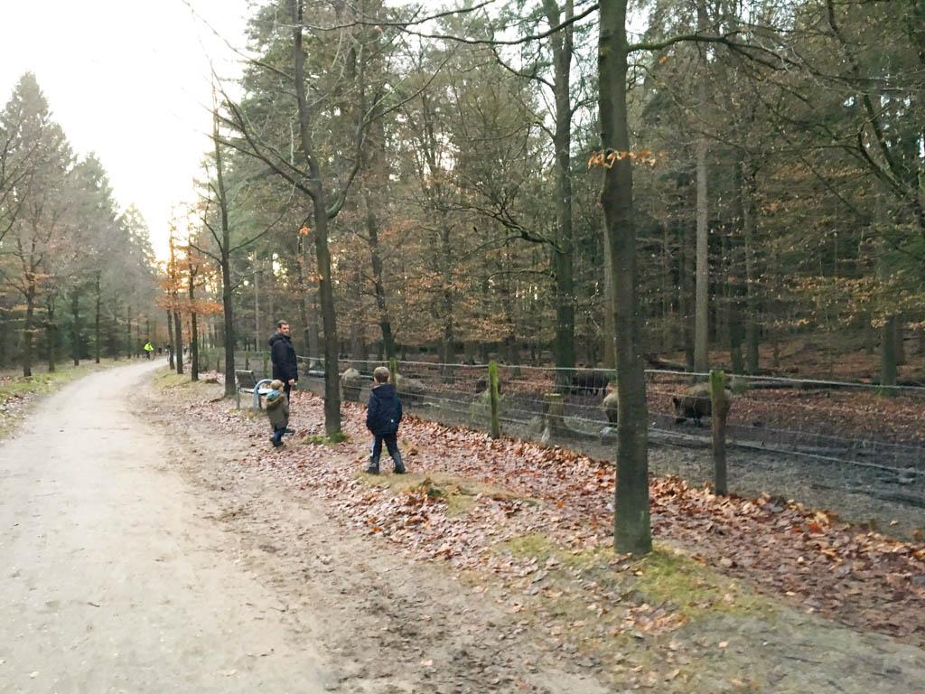 De wilde zwijnen zijn in Stadspark Berg en Bos altijd te zien. Leuk om eens te kijken als er net kleintjes geboren zijn.