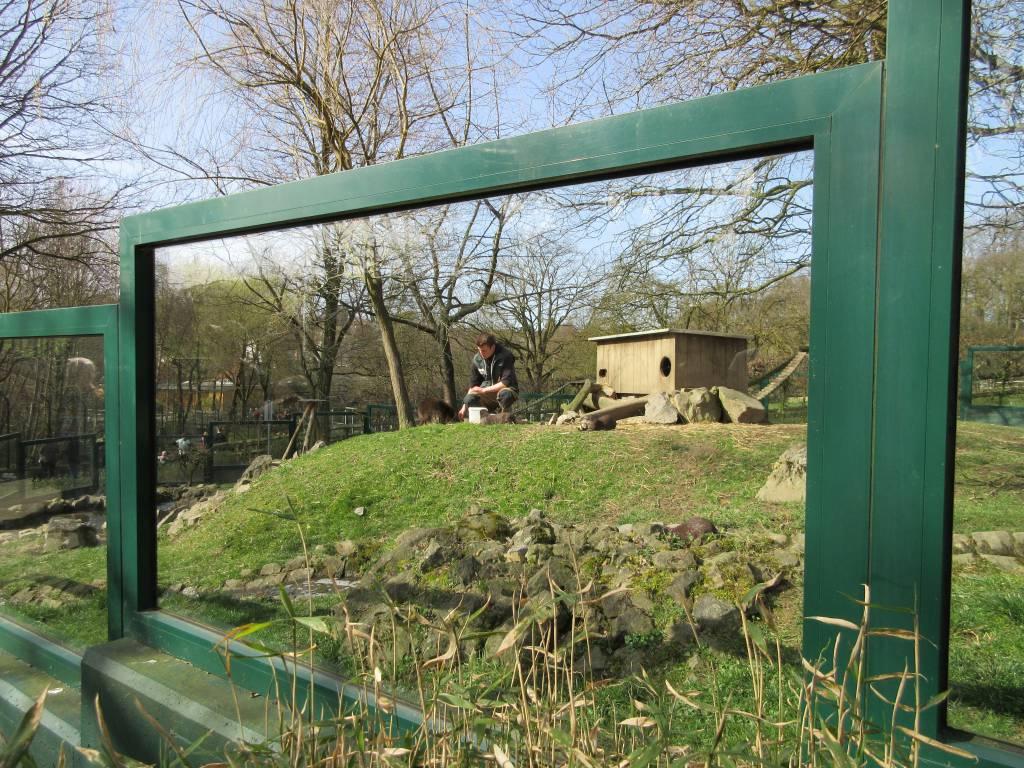 Voedertijd in Dierenpark Aken