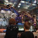 Koninklijk Belgisch instituut voor Natuurwetenschappen, het dinomuseum van Brussel
