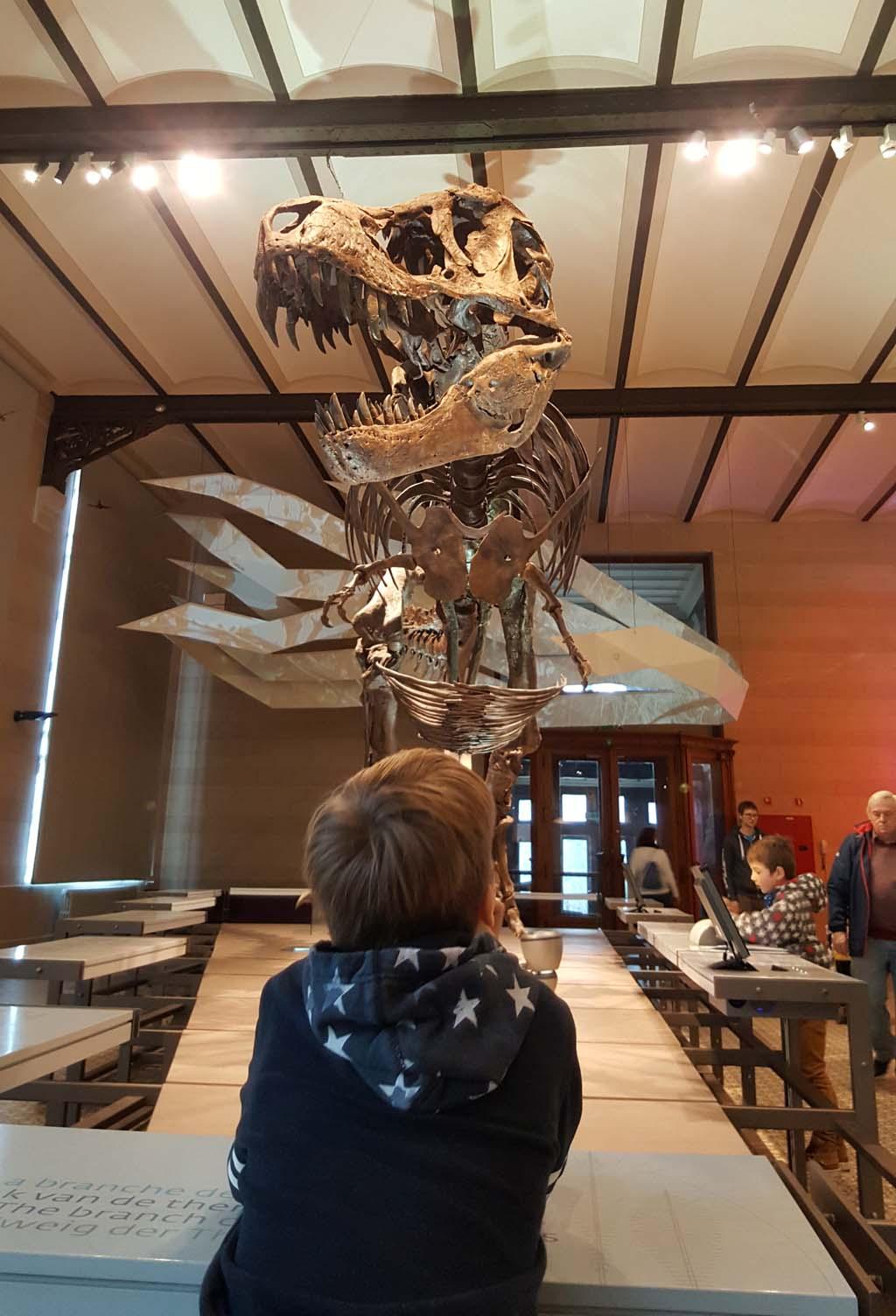 Wauw Stan wat ben je groot. dinomuseum