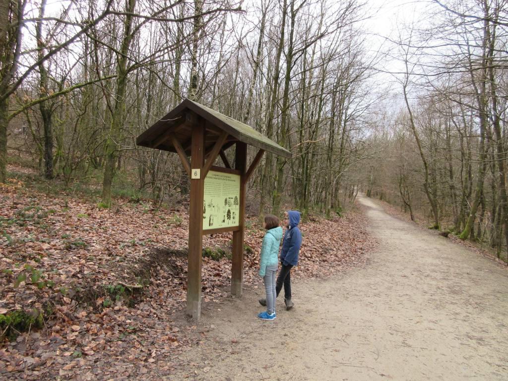 De borden geven informatie over de dieren, planten en bomen die je in de bossen tegen kunt komen