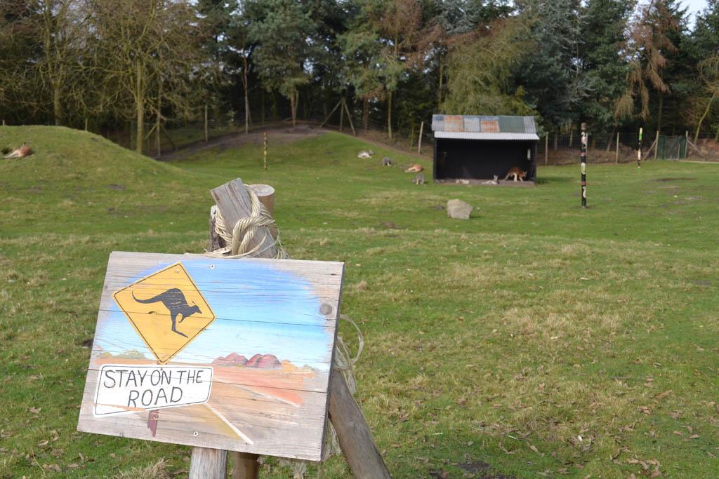 Pas op voor overstekende kangoeroes
