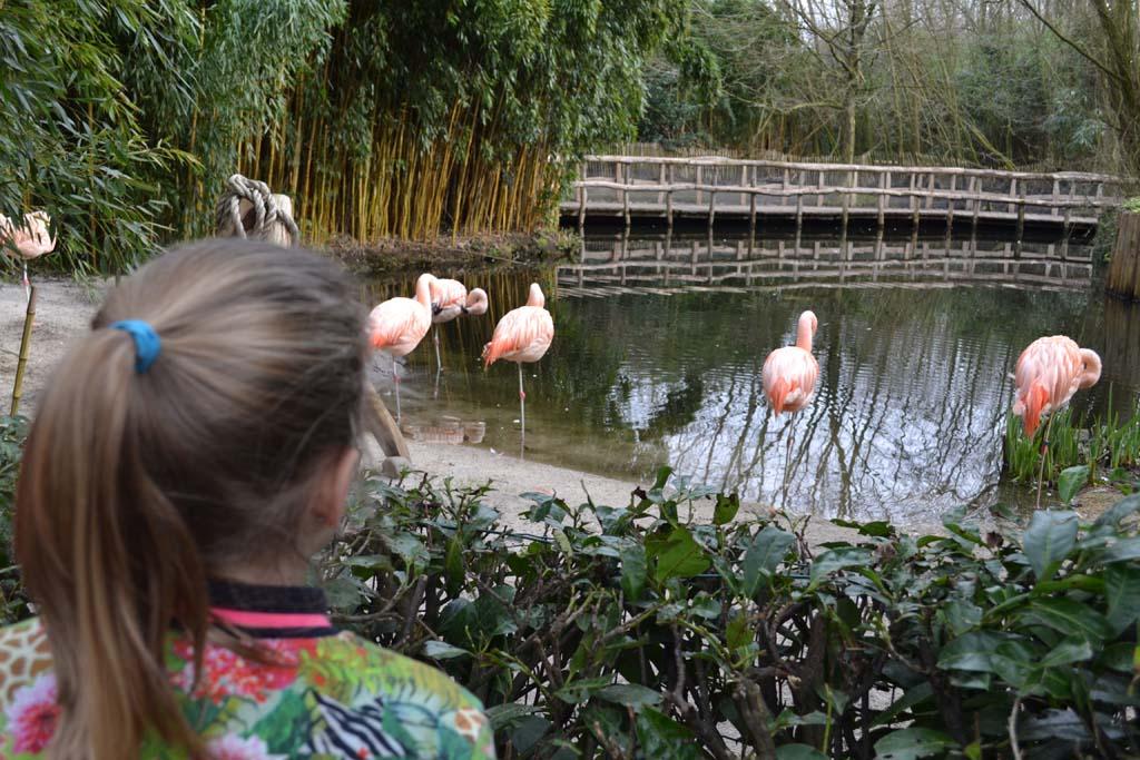 Mooie roze flamingo's