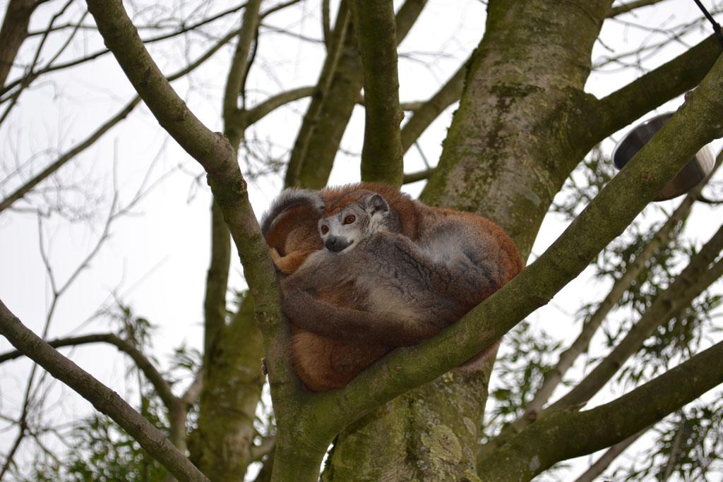 Veilig hoog in de boom