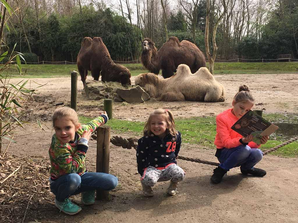 Dichtbij de kamelen
