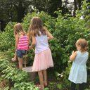 Fruit plukken bij Jopie's Groene Wereld