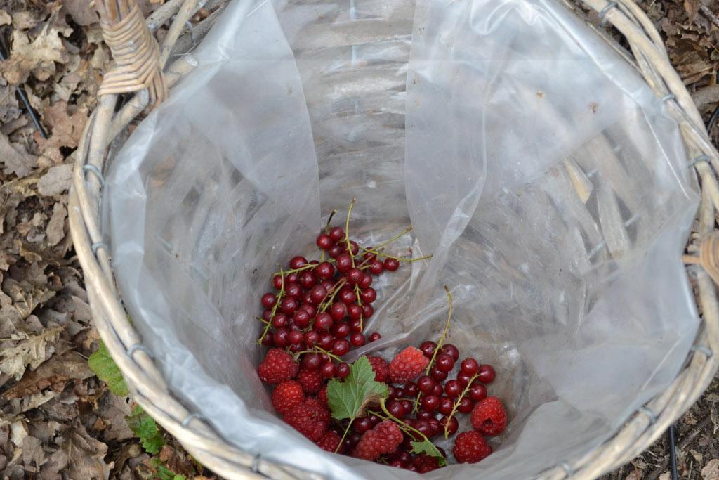 Al het geplukte fruit gaat in het mandje