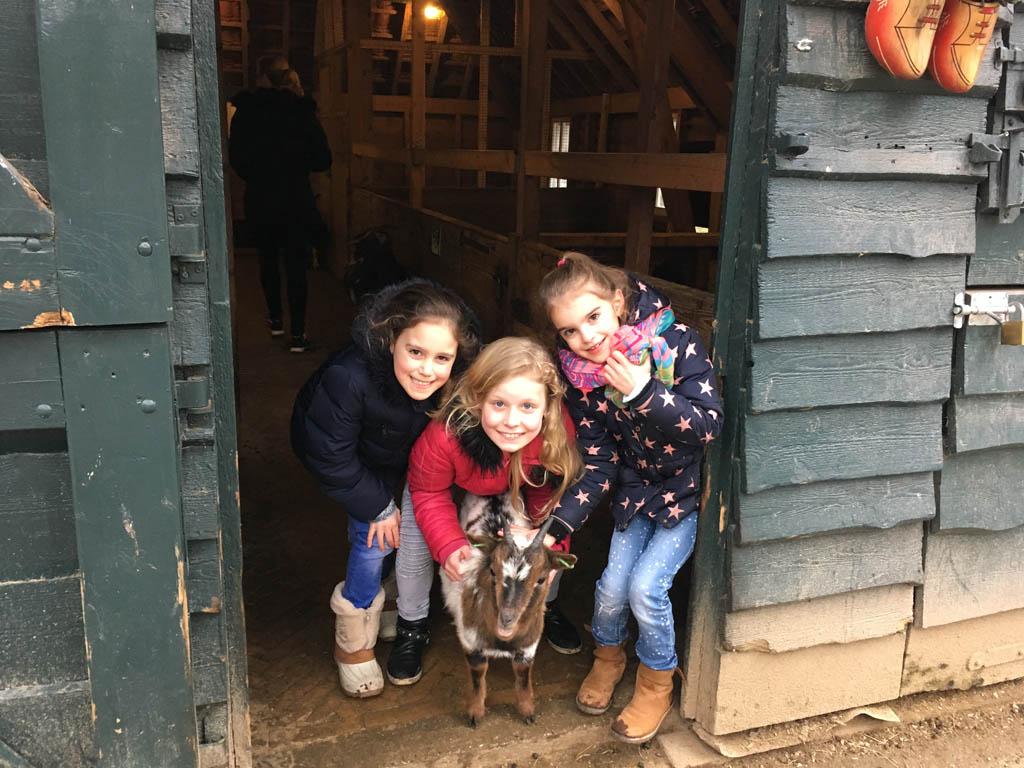 De kinderboerderij. De grote meiden vangen een geit.