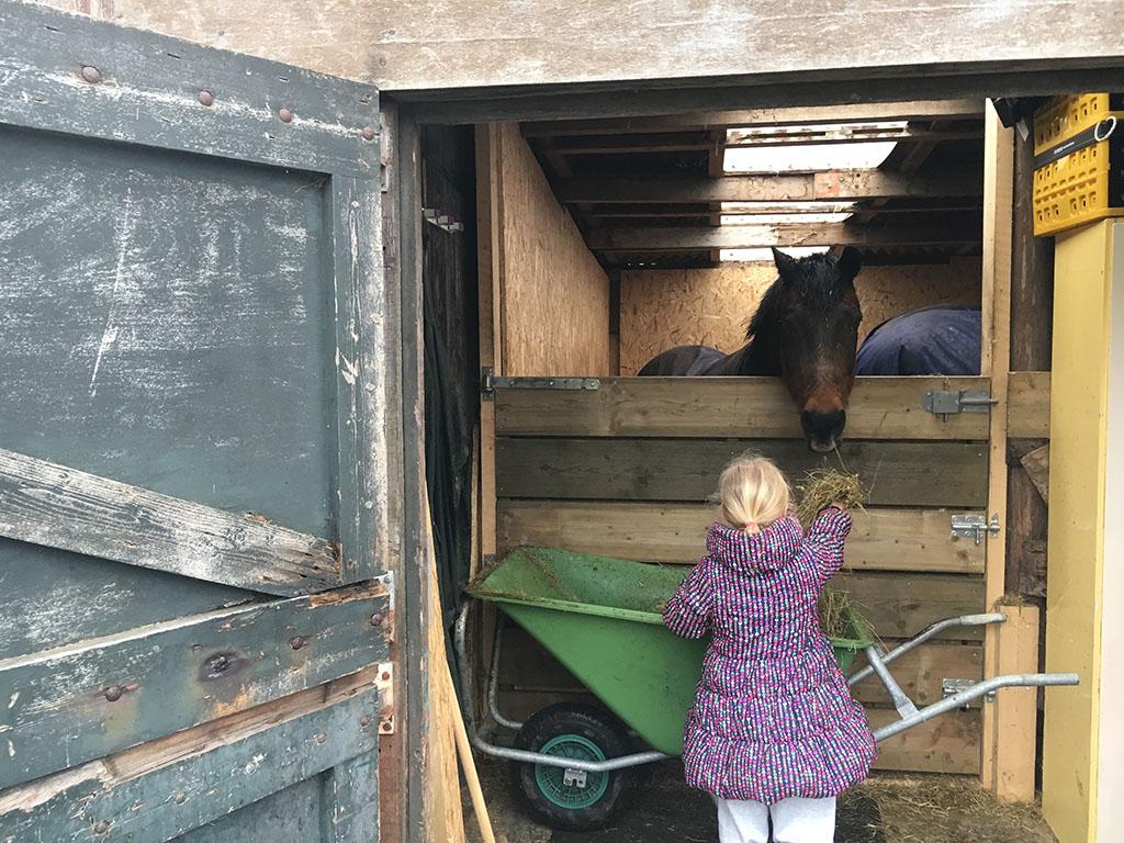 Wat hooi aan de pony's voeren