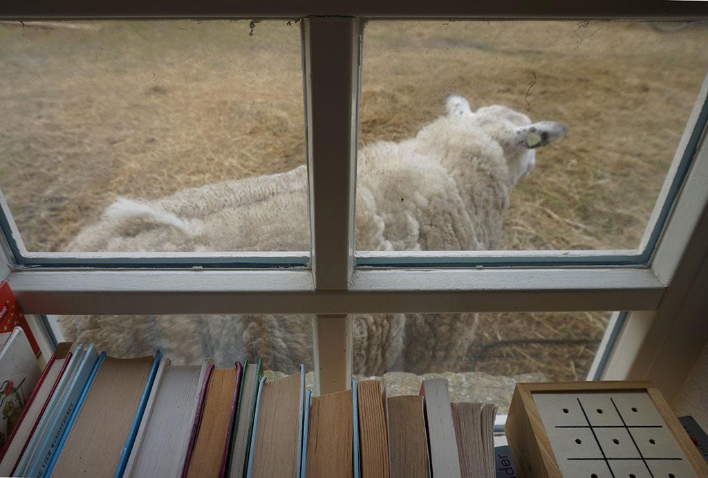 De schaapjes lopen langs het raam