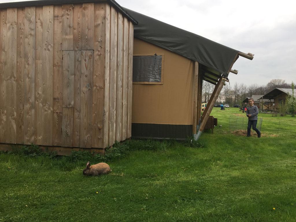 Help, konijn is ontsnapt!
