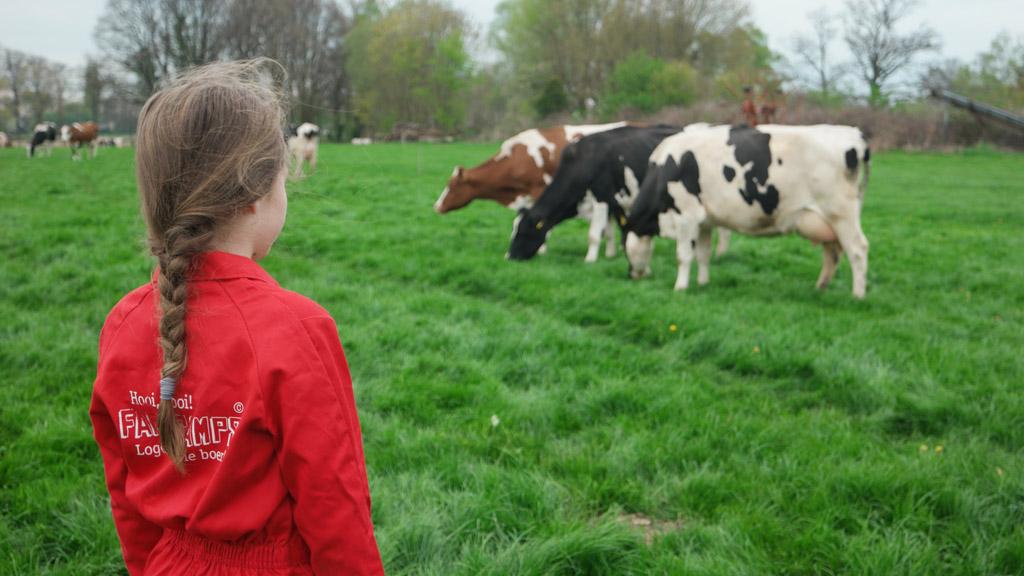 Tijd om de koeien uit de wei te halen.