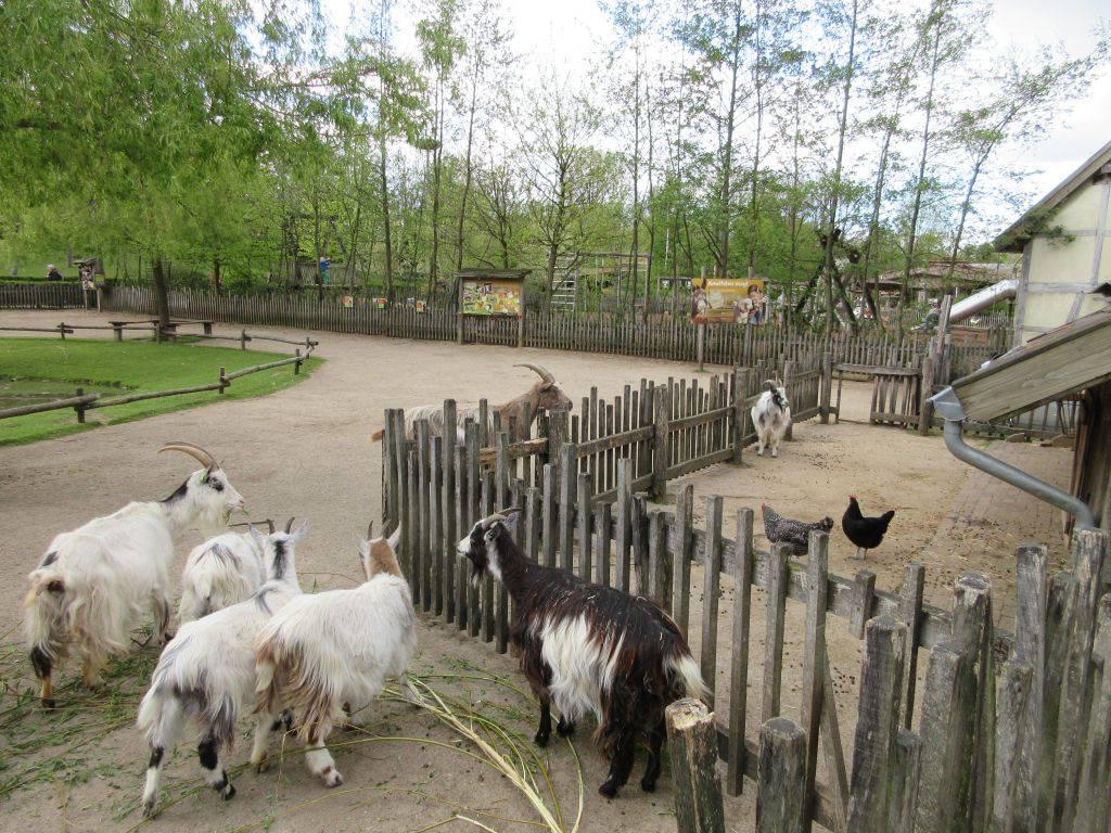 De kinderboerderij is leuk voor de jongste bezoekertjes