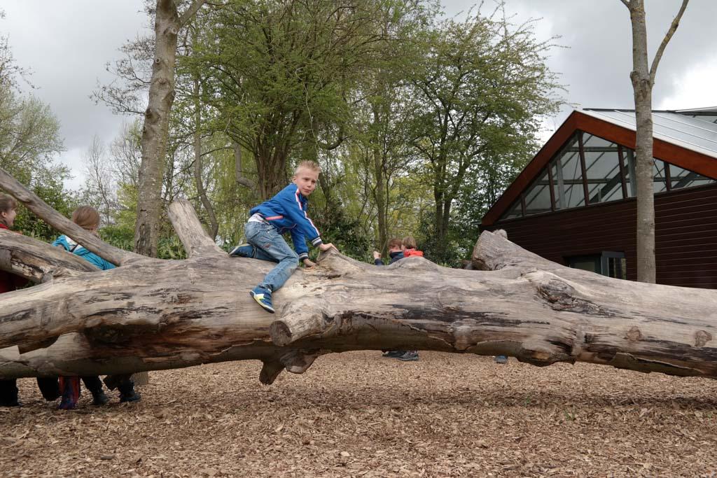 Een dikke boomstam om op te klauteren.
