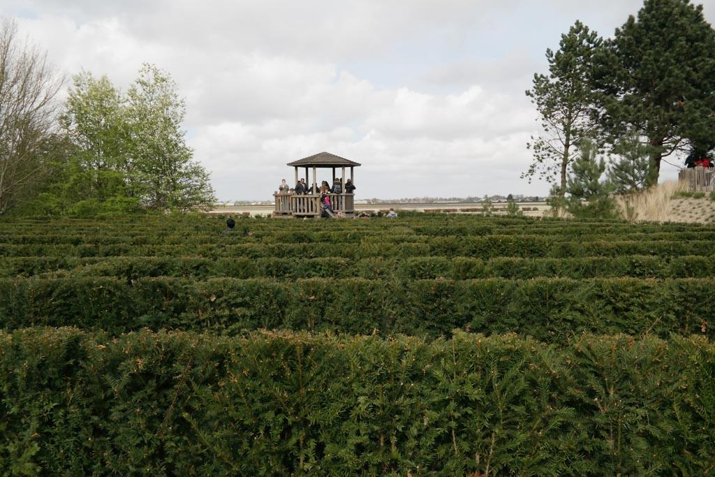 Het doolhof leidt naar de uitkijktoren aan de rand van het bollenveld.