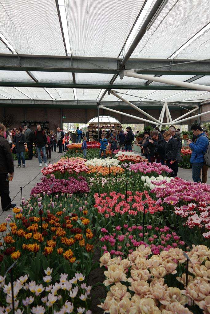 Een bloemenshow in één van de paviljoens.