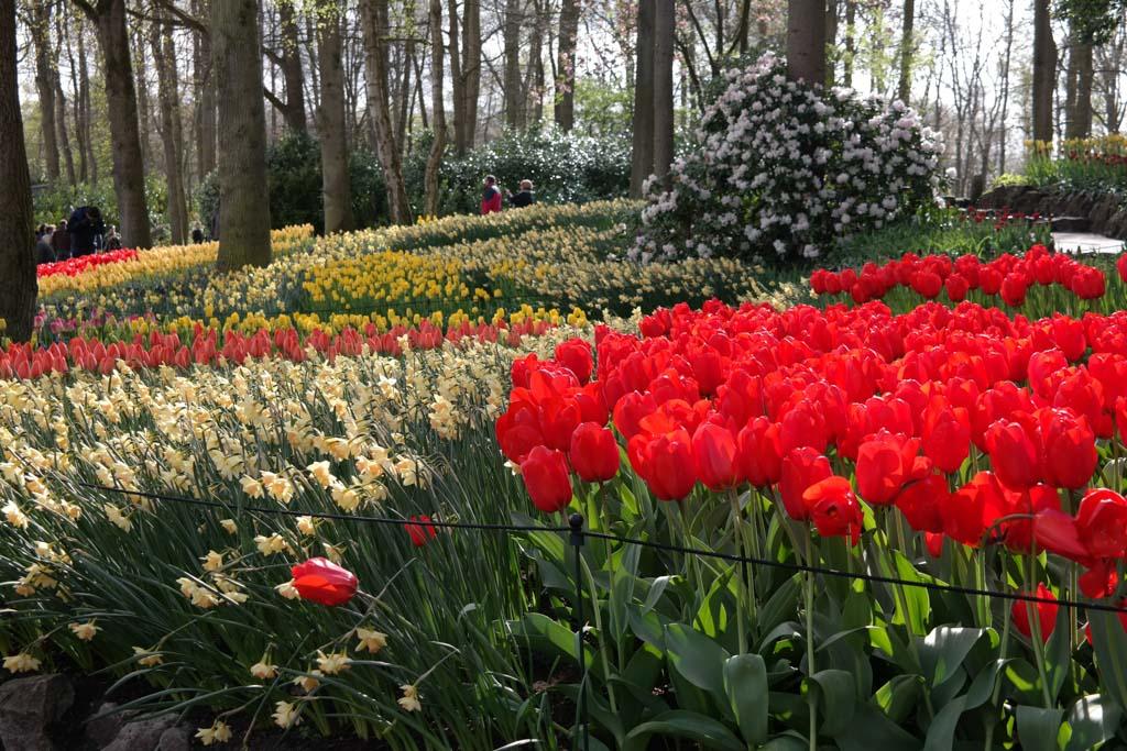 Kleurenpracht in het bosrijke deel van het park.