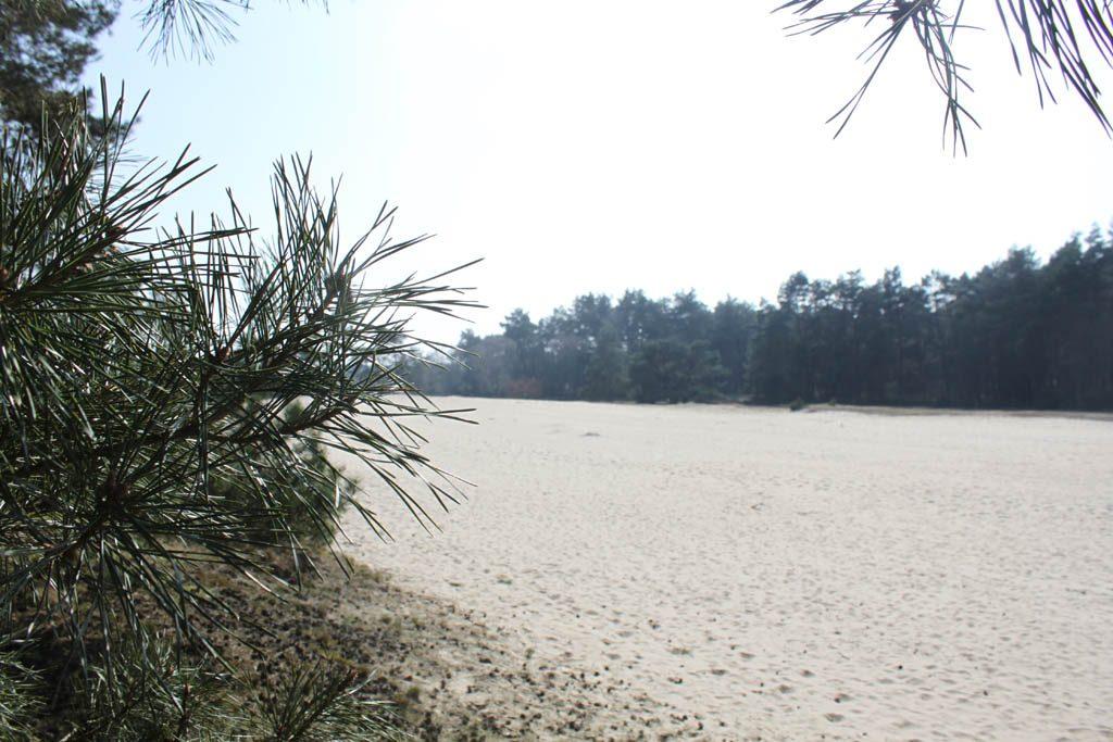 Vlakbij De Houtzagerij is een grote zandverstuiving.