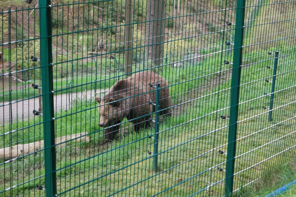 De beer met de tic.