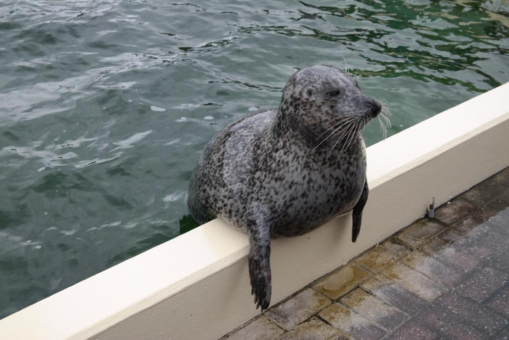 De zeehondenshow is ontzettend leuk en erg aantrekkelijk voor kinderen.