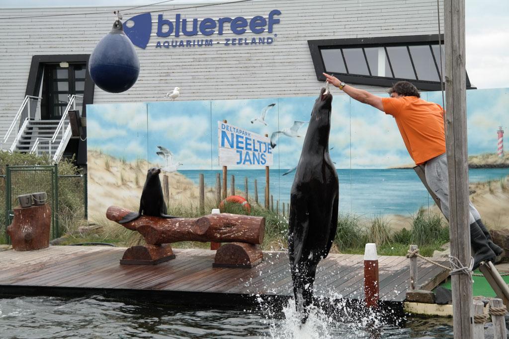 Stunts tijdens de zeeleeuwenshow.