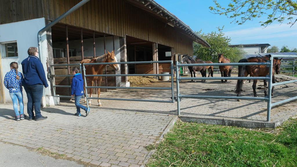 Bij de paarden kijken.