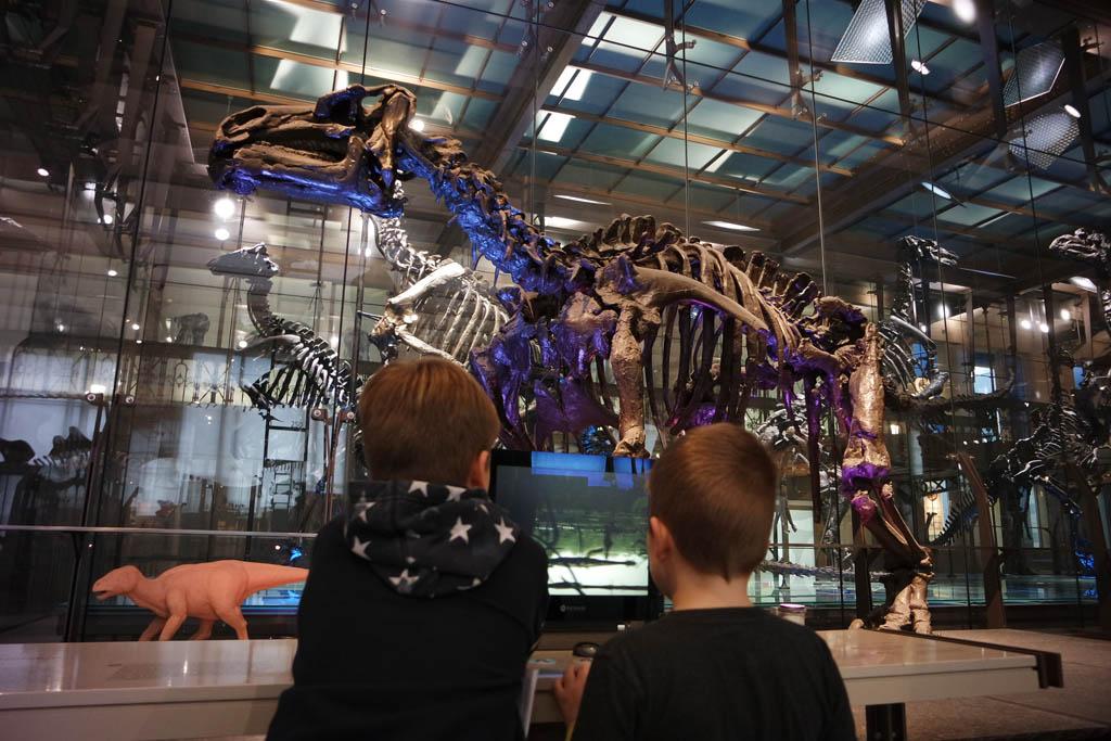 Dino-fans moeten echt naar Brussel.