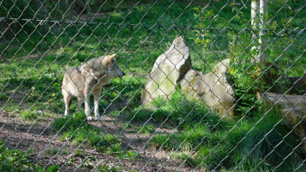 De wolven.