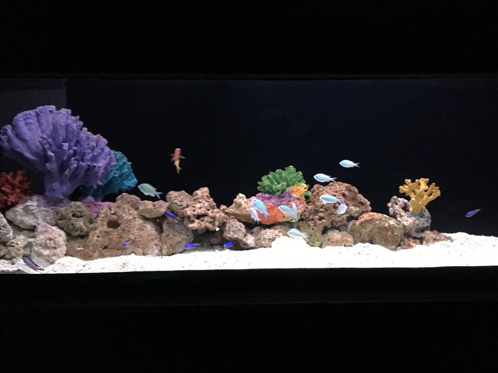 Visjes kijken