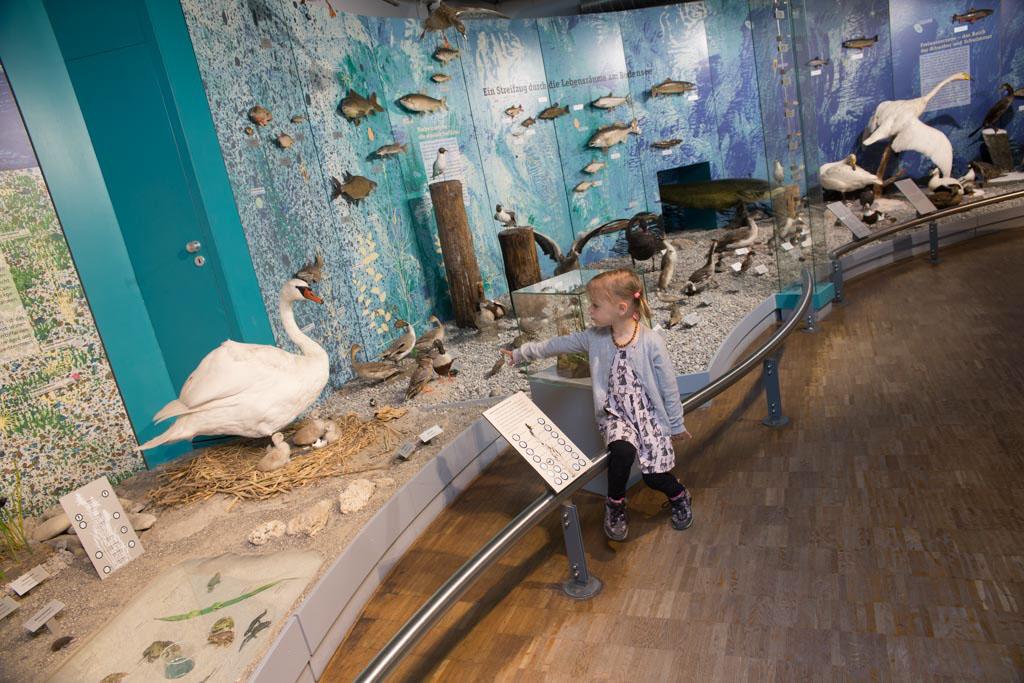 Het Naturmuseum in Konstanz is een bezoekje waard.
