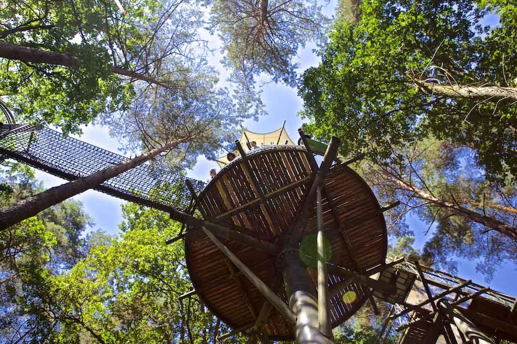 Het boomkroonpad Pfalzerwald (© archiv biosphärenhaus).