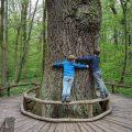 Zou dit de dikste boom van de wereld zijn mam?