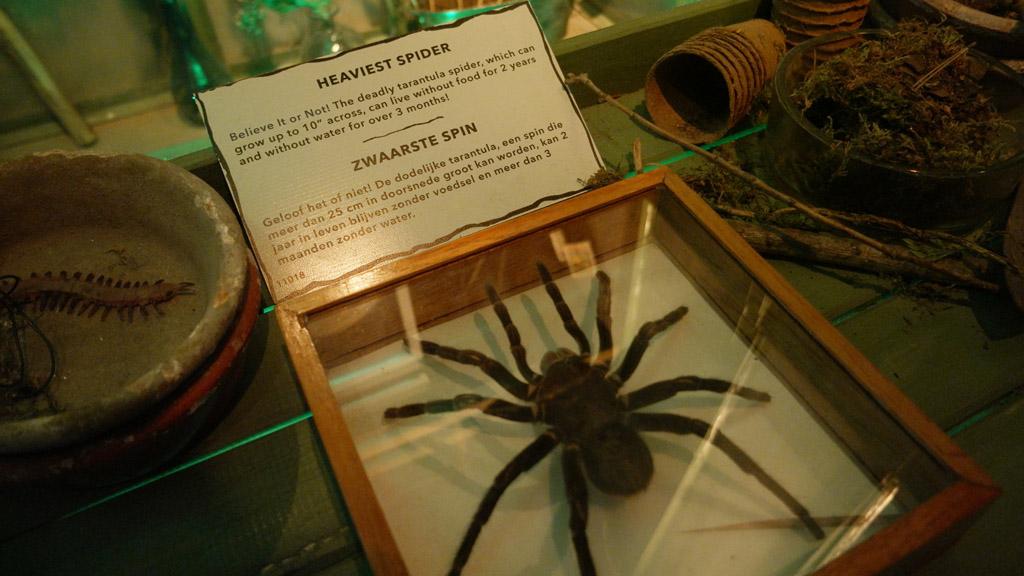 Iek, een hele grote spin!