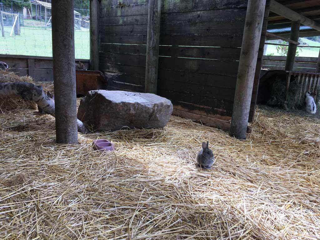 Een heel groot konijnenhok