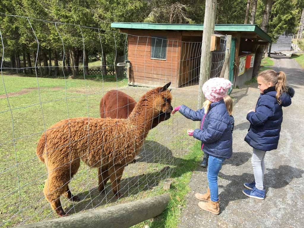 De alpaca die Namé's vinger voor eten aanziet