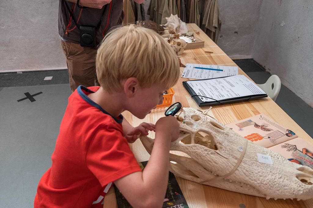 Schedels onderzoeken bij het zomerprogramma van Naturalis