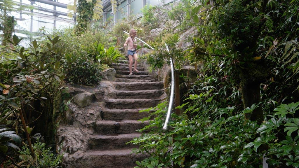 In het tropische gedeelte van de botanische tuin.