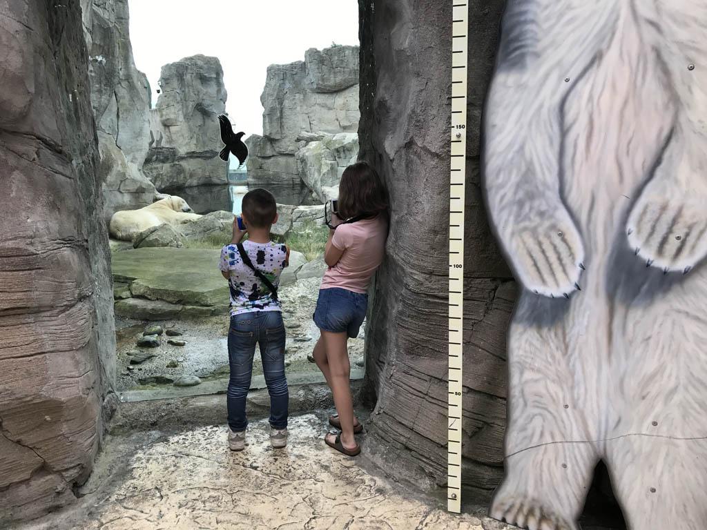 Wat is een ijsbeer groot!