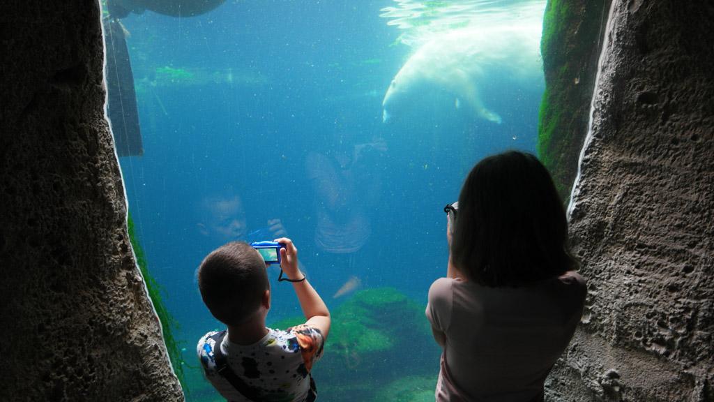 Bijzonder: een ijsbeer zelfs onder water kunnen bekijken.