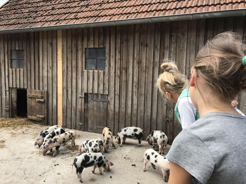 De jonge varkens op het museum terrein stelen de harten van Roos en Jet. Het liefst willen ze een varkentje mee naar huis nemen uit regio Emsland